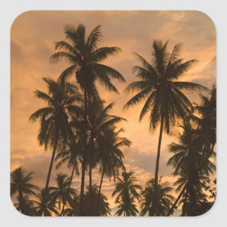 Sunset with Palm Trees, Moorea, French Polynesia Square Sticker