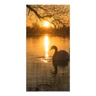 Sunset with Swan Card