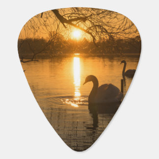 Sunset with Swan Plectrum