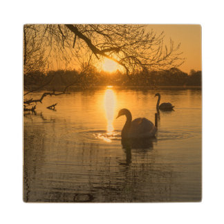 Sunset with Swan Wood Coaster