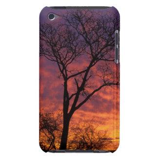 Sunset With White Seringa (Kirkia Acuminata) iPod Touch Covers