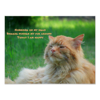 Sunshine Breeze Happy Cat Haiku Poster