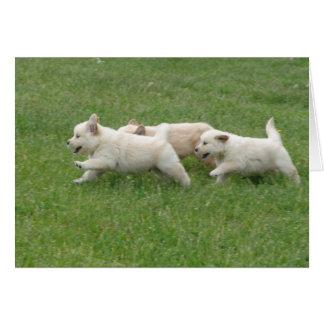 Sunshine Hill Puppies Card