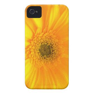 Sunshine iPhone 4 Case
