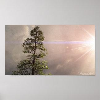 Sunshine Pine Print