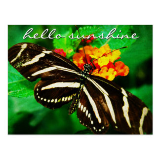"""Sunshine"" quote black butterfly photo postcard"
