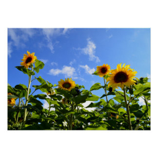 Sunshine & Sunflowers Poster