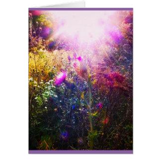 sunshine thistle photo card