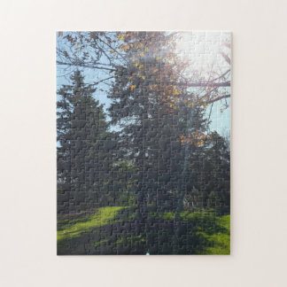 Sunshine Through The Trees Jigsaw Puzzle