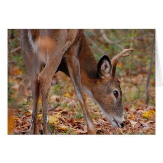 Sunshine upon my body - deer, young buck card
