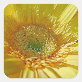Sunshine Yellow Gerbera Daisy Square Sticker