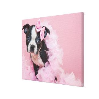 Super Cute Boston Terrier Puppy Wearing A Boa Canvas Prints