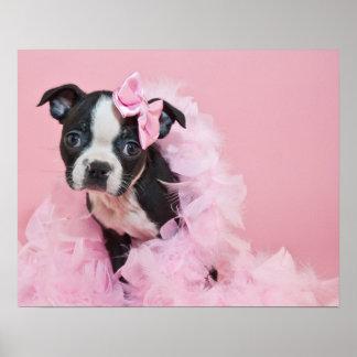 Super Cute Boston Terrier Puppy Wearing A Boa Poster
