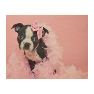 Super Cute Boston Terrier Puppy Wearing A Boa Wood Print