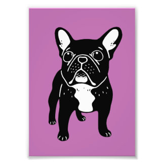 Super cute brindle French Bulldog Puppy Photo Print