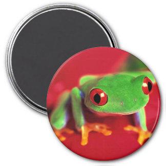 super cute frog magnet