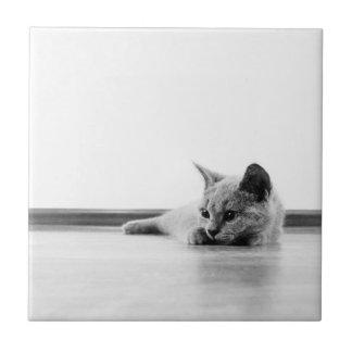 Super Cute Scottish Fold Kitten Cat Ceramic Tile