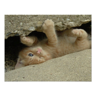Super Hero Kitty Cat Humor Posters