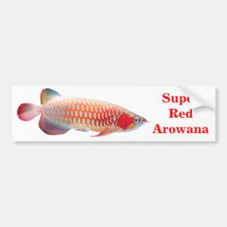 """""""Super Red Arowana"""" 優良製品 2 バンパーステッカー"""