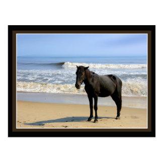 Surf Horse Postcards