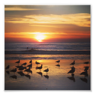 Surfing at Sunset Photo Print