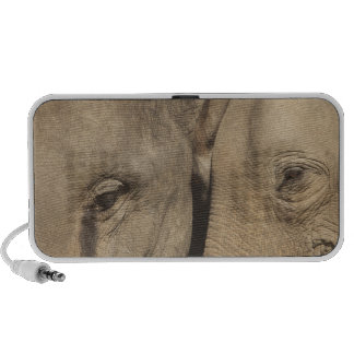 Surin Elephant Round Up, Surin Elephant Show iPhone Speaker