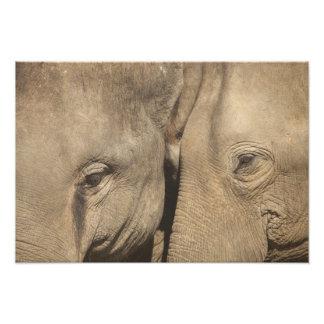 Surin Elephant Round Up, Surin Elephant Show Photograph