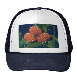 Surinam cherry the edible-fruit (Eugenia uniflora) Mesh Hats