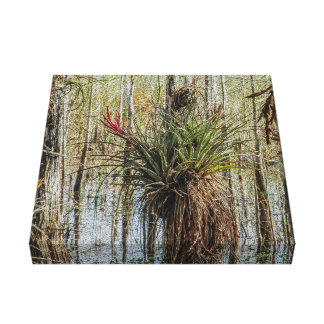 Surprise in the Swamp - A Bromeliad on a tree Canvas Print