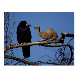Surprised Crow Postcard
