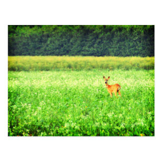 Surprised, deer in the fields Lomo Postcard