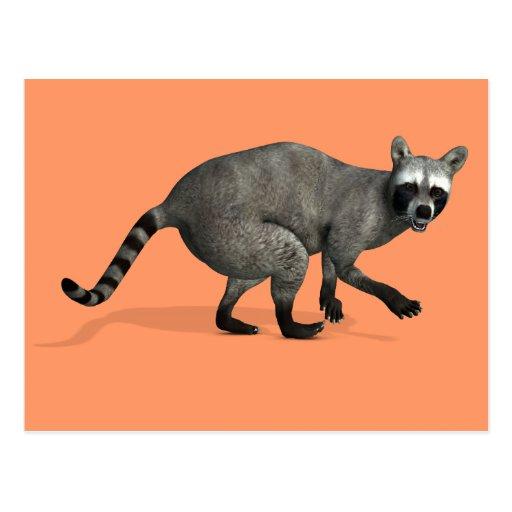 Surprised Raccoon Post Card