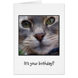 Surprized Cat It s your birthday Cards