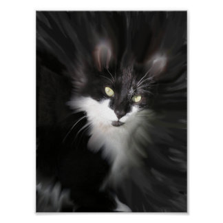 Surreal Cat Print