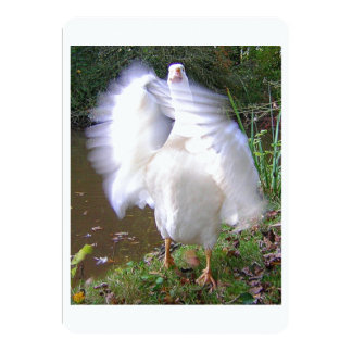 Surreal Motion Blurred Picture Of White Goose Flap Card