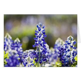 Surrounded by bluebonnets greeting card