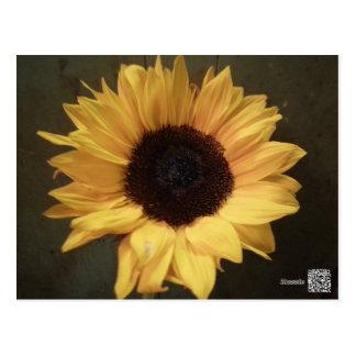Susan's Sunflower Postcard