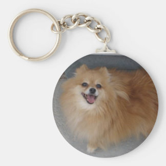 Sushi _ Pomeranian Key Ring