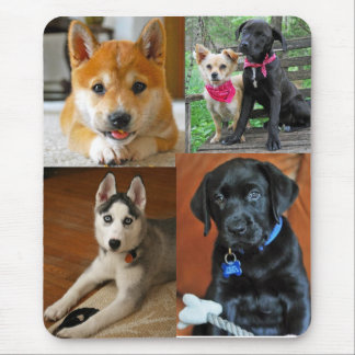 sushi-the-shiba-inu_45338_2010-05-05_w450, magg... mouse pad