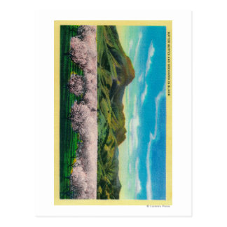 Sutter Buttes and Orchards in Bloom Postcard