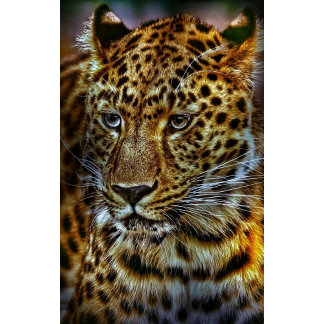 Big Cat Leopard