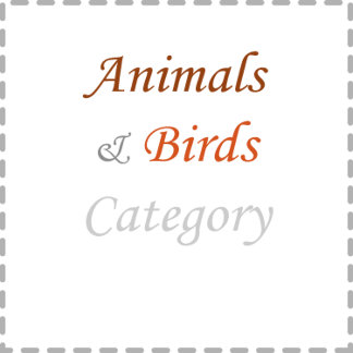 Birds and Animals