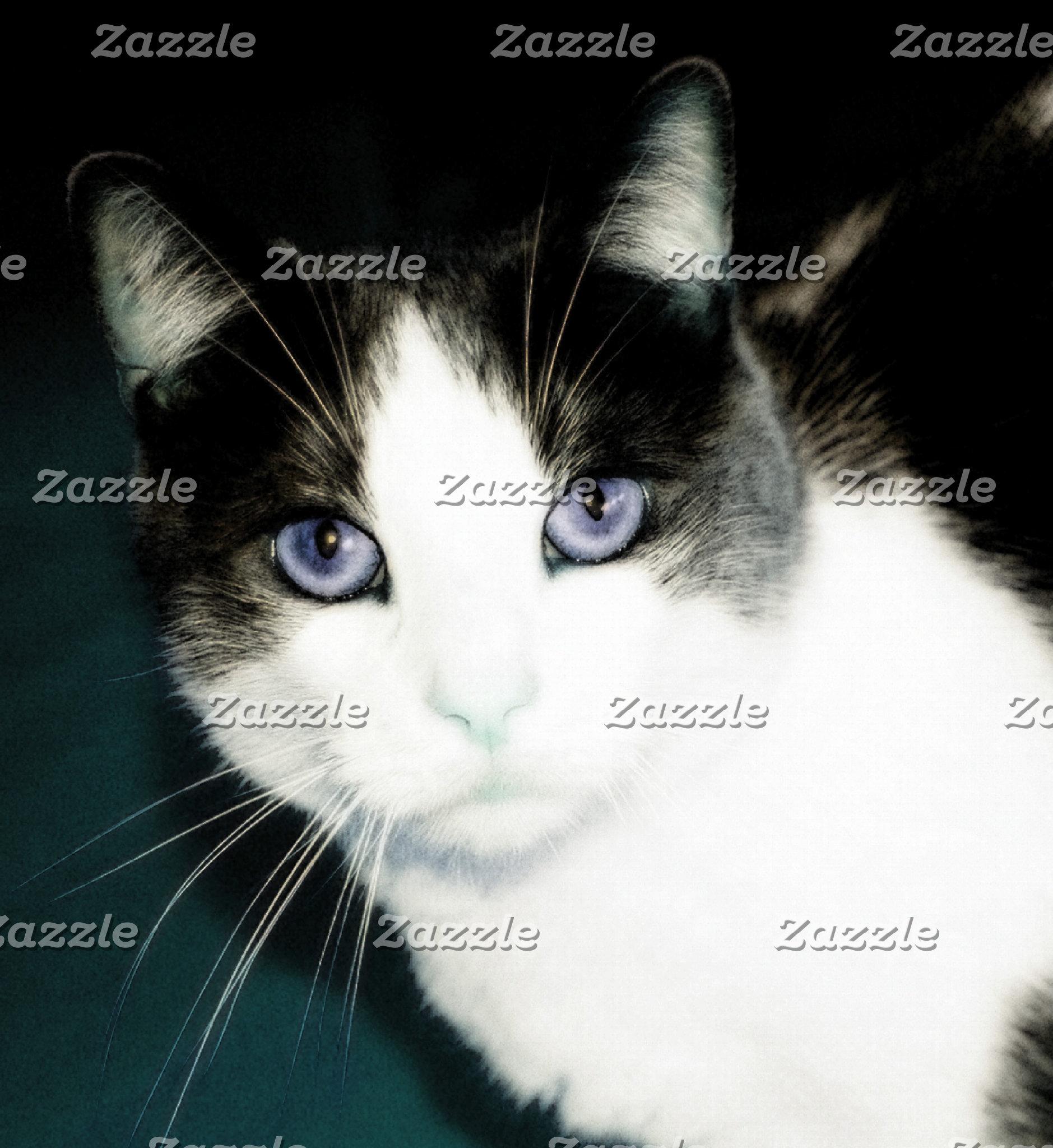 Keen-Eye Kitty