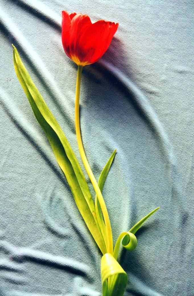 Flower (Photos)