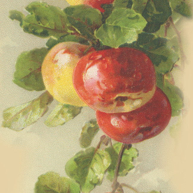 Vintage fruit art