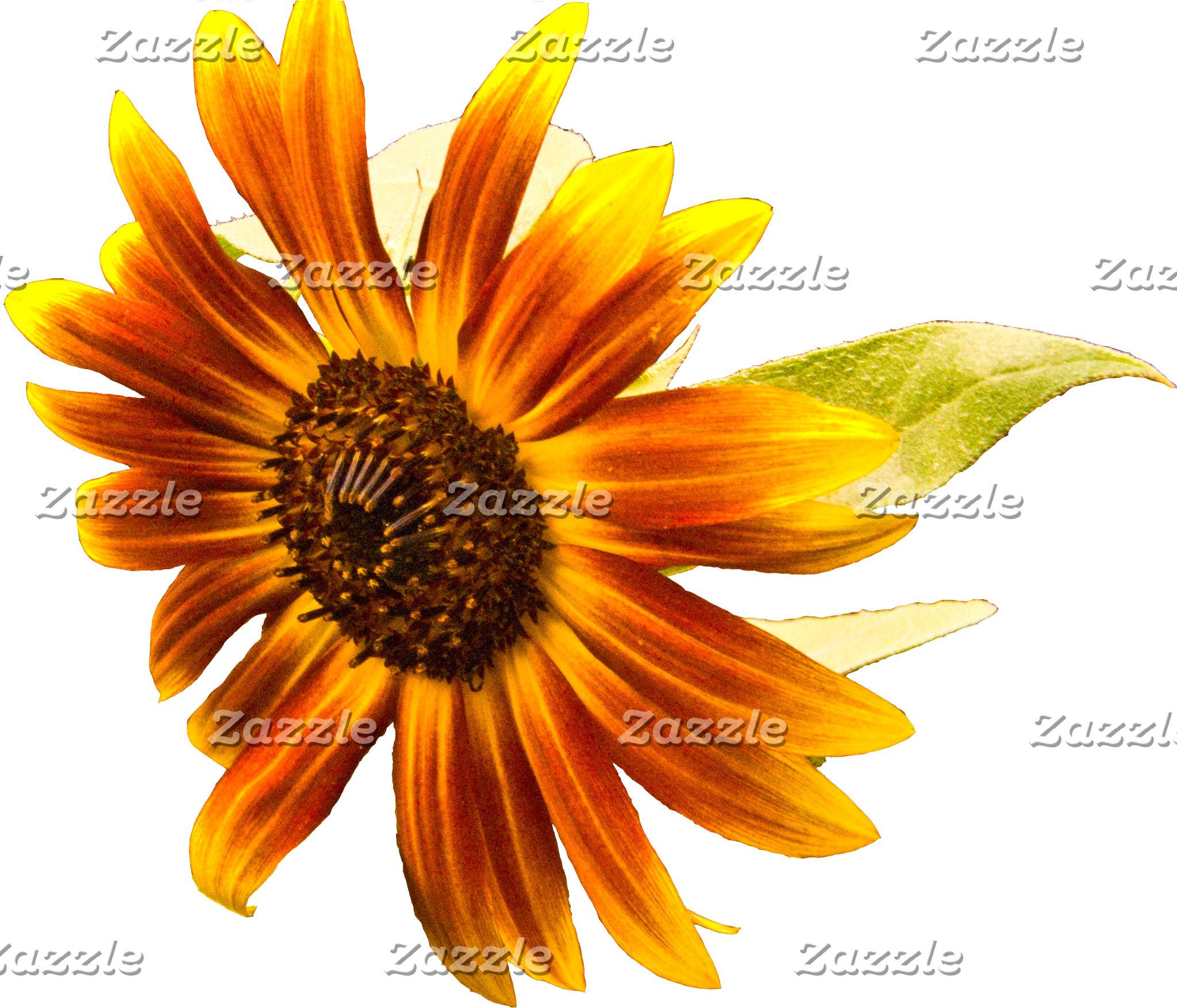 Sunshine Super Sunflower