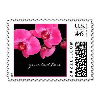6 | Orchids