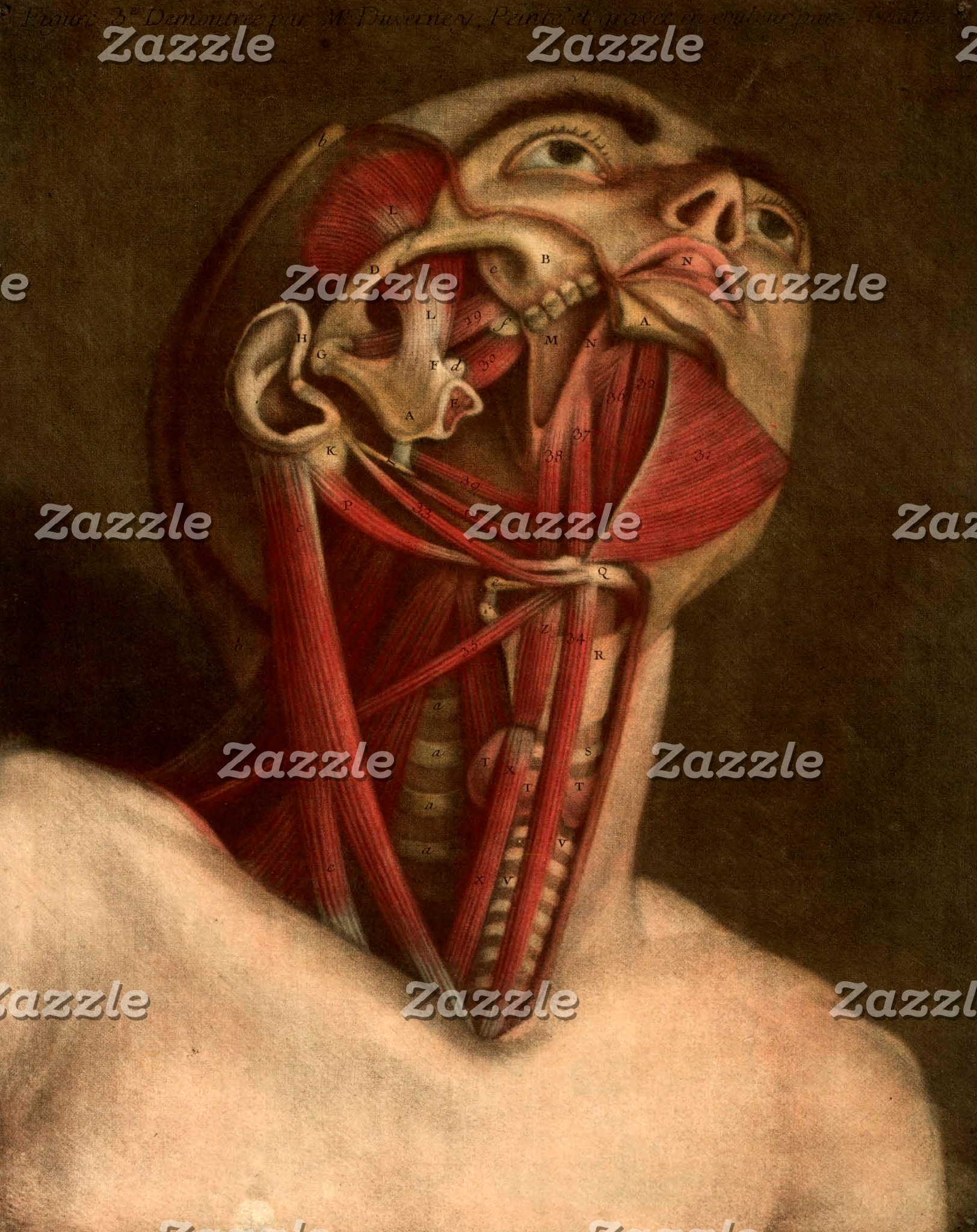 Vintage Anatomy | Head III