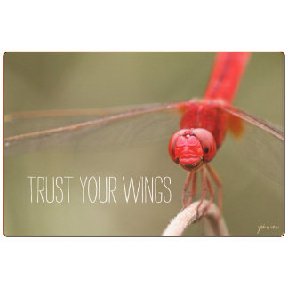 Trust Your Wings Quote Red Dragonfly