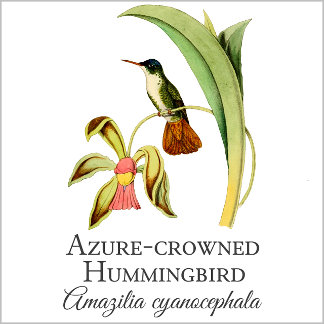 Azure-crowned
